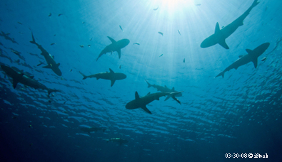 I can't believe I swam with sharks