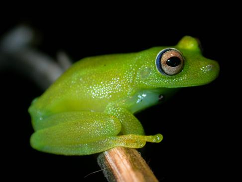 Bolivian Amphibian Initiatve photo 2