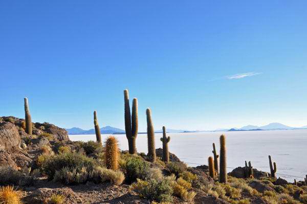 Cacti Island, Salar de Uyuni