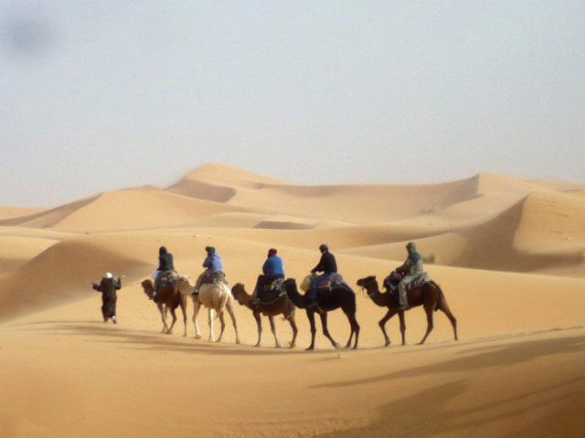 Camel Caravan Sahara Desert, Morocco by GoErinGo