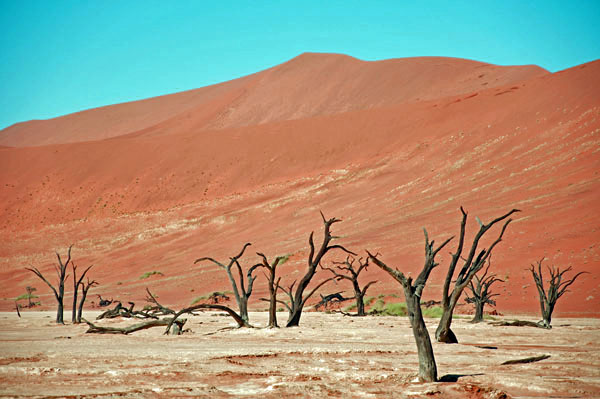 900-year-old Trees in Dead Vlei, Nam Desert, Namibia