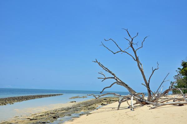 Drfit Wood, Green Island photo by GoErinGo