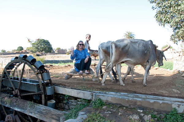 Riding a well wheel driven by oxen, rural India