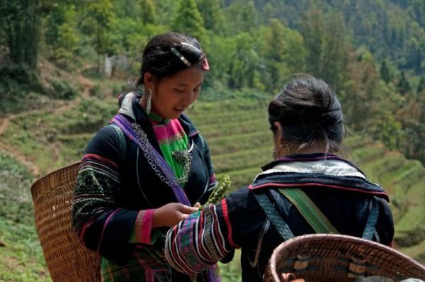 Hmong Girls, Sapa