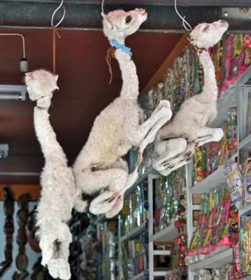 Llama Fetuses, Witch's Market, La Paz, Bolivia