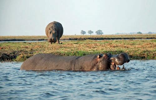 Open Wide Hippo, photo by GoErinGo