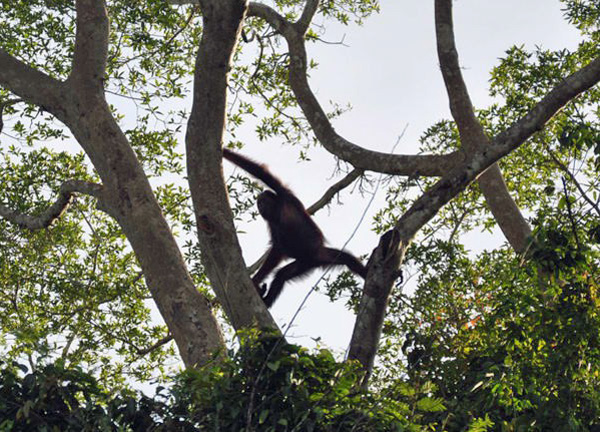 Orangutan Yoga, photo by GoErinGo