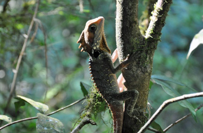 Rainforest Reptile 2 photo by GoErinGo