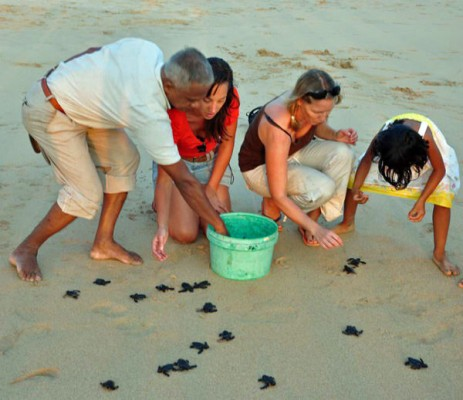 Releasing Turtle Hatchings, Sri Lanka