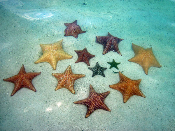 Starfish in San Blas, photo by GoErinGo