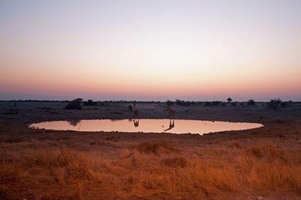 Watering Hole at Etosha, photo by GoErinGo