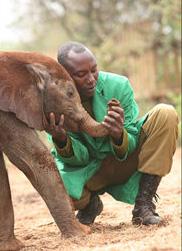 orpha_elephant