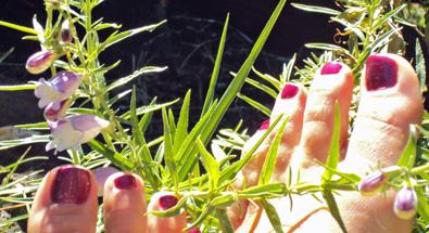 toes_in_garden